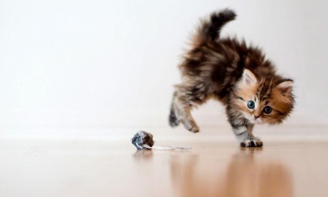 Ben Torode e proprietarul celei mai dragute pisici din lume - Poza 17
