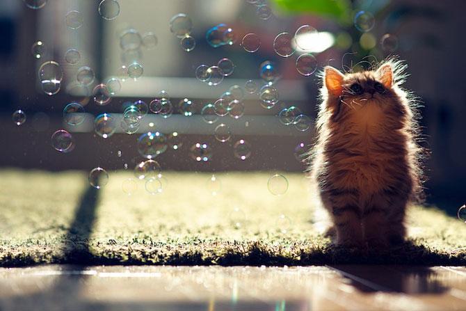 Ben Torode e proprietarul celei mai dragute pisici din lume - Poza 18