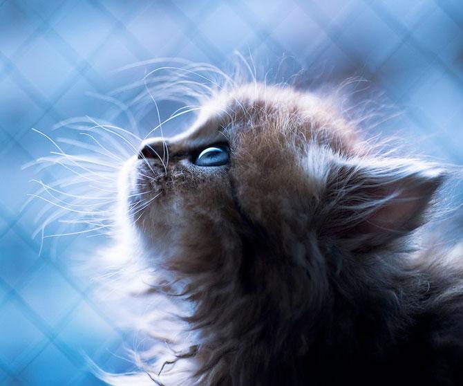 Ben Torode e proprietarul celei mai dragute pisici din lume - Poza 19