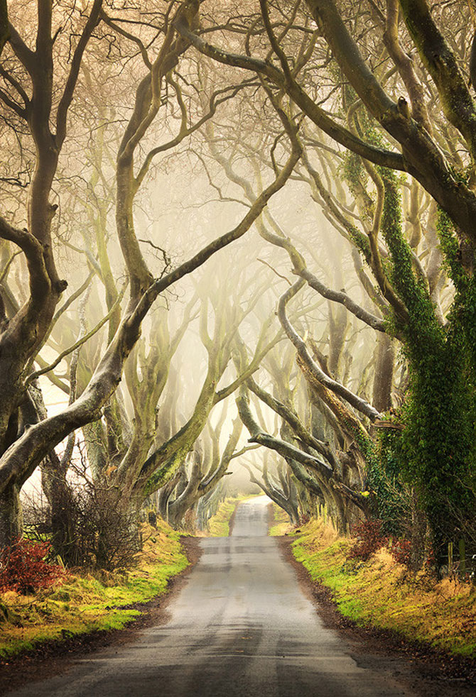 Drumul minunat din Irlanda de Nord: Dark Hedges - Poza 1