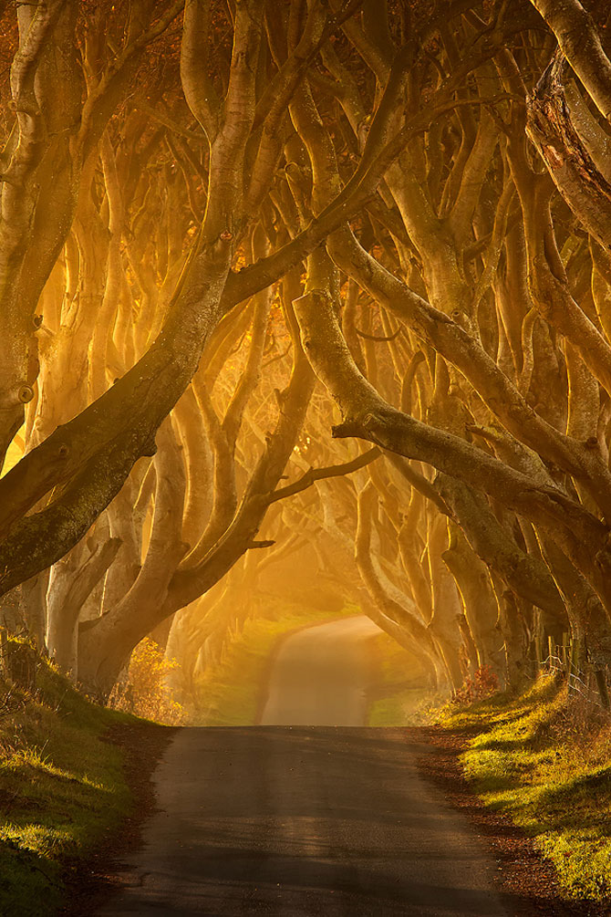 Drumul minunat din Irlanda de Nord: Dark Hedges - Poza 2