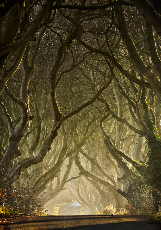 Drumul minunat din Irlanda de Nord: Dark Hedges - Poza 3