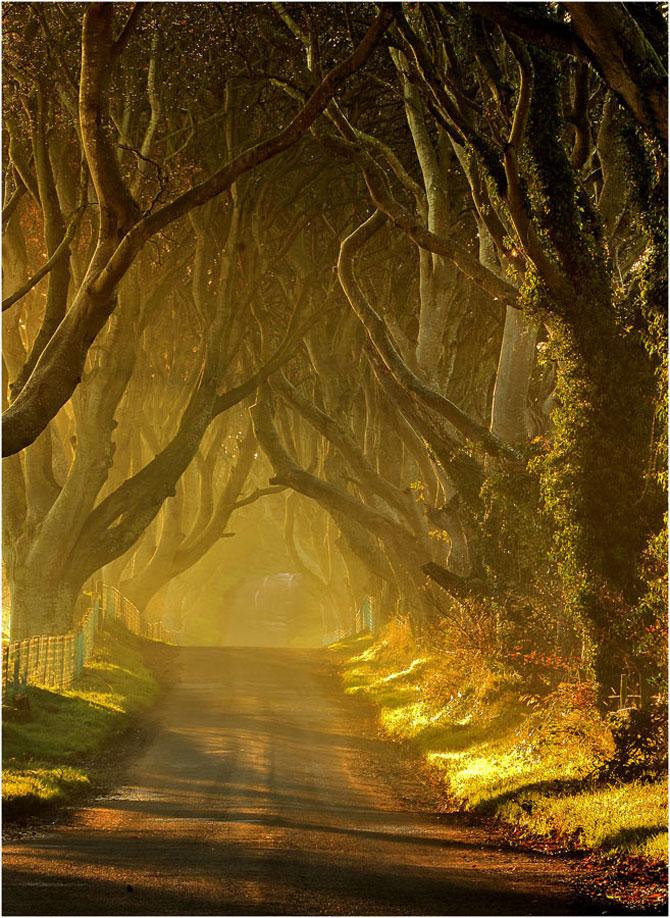Drumul minunat din Irlanda de Nord: Dark Hedges - Poza 4
