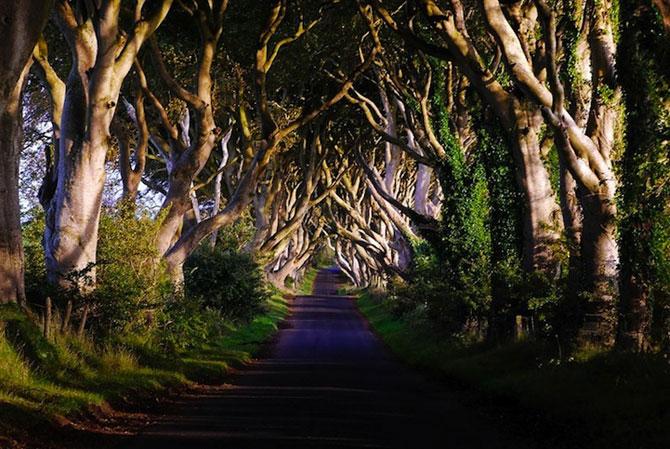 Drumul minunat din Irlanda de Nord: Dark Hedges - Poza 5