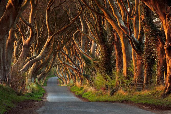 Drumul minunat din Irlanda de Nord: Dark Hedges - Poza 6
