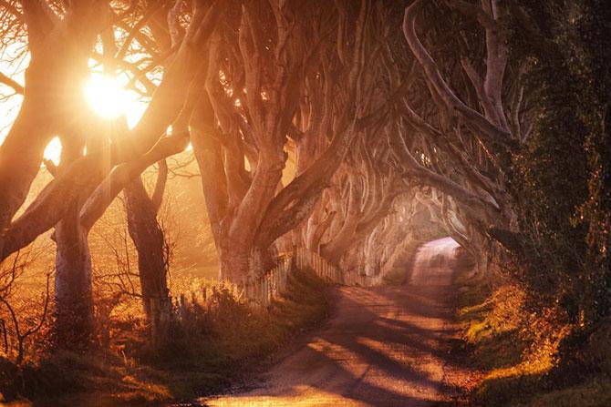 Drumul minunat din Irlanda de Nord: Dark Hedges - Poza 7