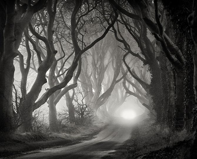 Drumul minunat din Irlanda de Nord: Dark Hedges - Poza 8