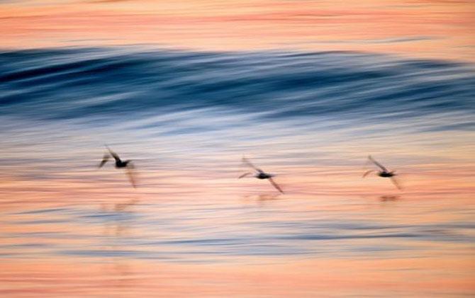 Vara eterna rasare din valurile lui David Orias - Poza 12