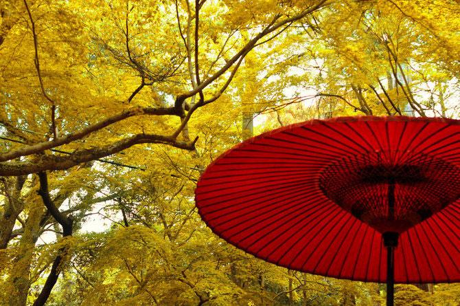 Peisaje in culori jucause, de David Plus1 - Poza 6
