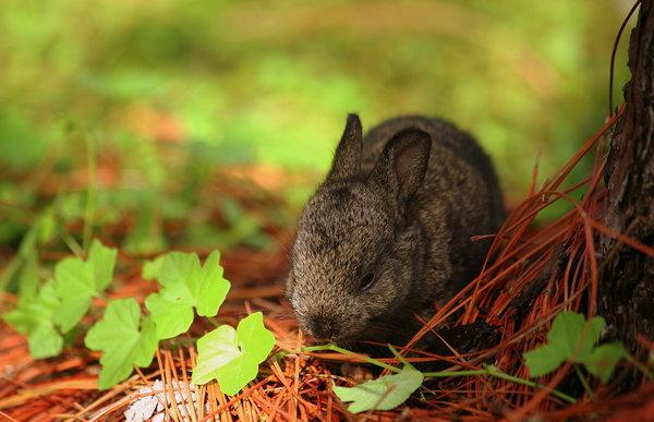Atentie: Animale simpatice in 45 de poze! - Poza 14