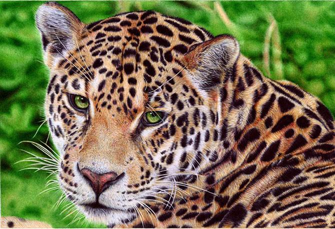 Incredibile desene cu pixul, de Samuel Silva - Poza 6