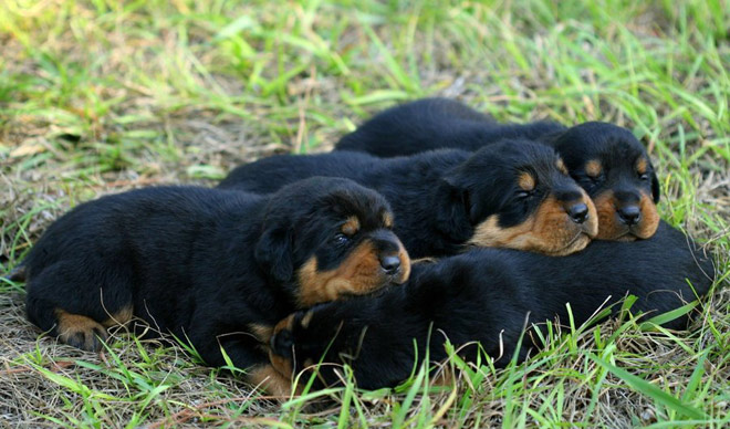 Atentie: Animale simpatice in 45 de poze! - Poza 15