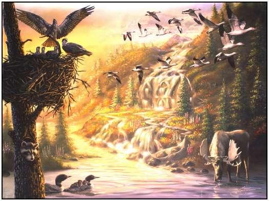 Donald Rust - Iluzii impresionante - Poza 21