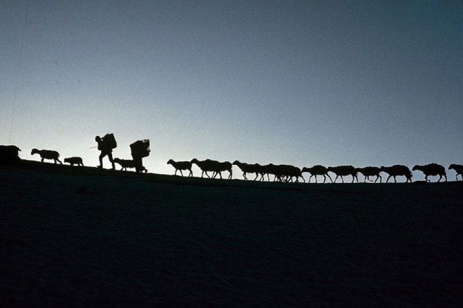 Pe crestele Himalayei, cu Eric Valli - Poza 10