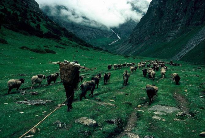 Pe crestele Himalayei, cu Eric Valli - Poza 14