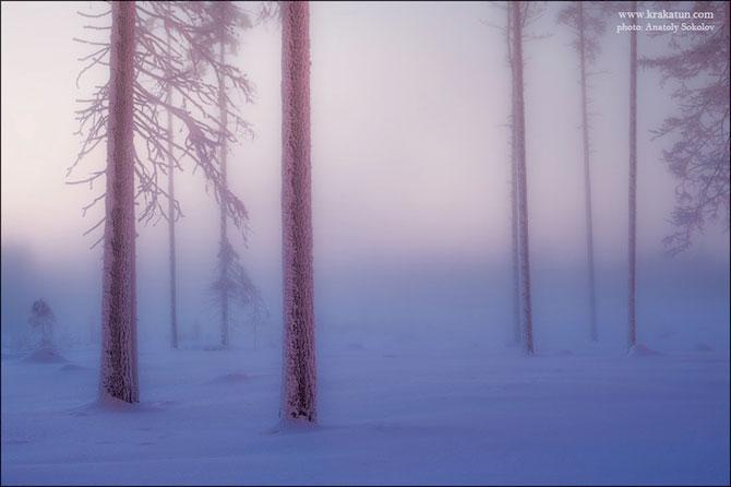 In padurea zanelor cu Anatoly Sokolov - Poza 4