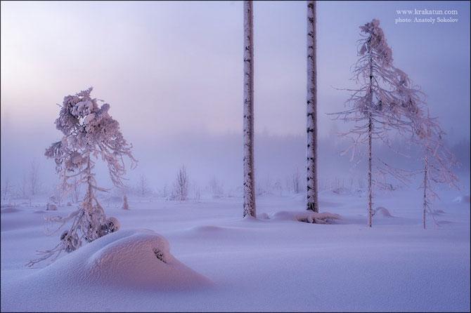 In padurea zanelor cu Anatoly Sokolov - Poza 10