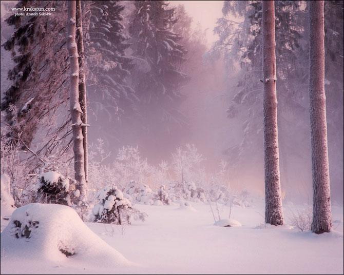 In padurea zanelor cu Anatoly Sokolov - Poza 11