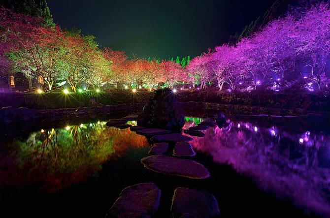 Festivalul ciresilor infloriti din Taiwan