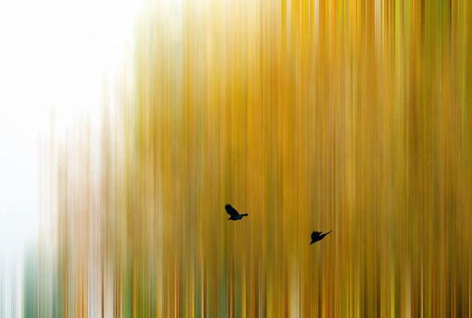 Fotografii nominalizate la Premiile Revistei Smithsonian 2014
