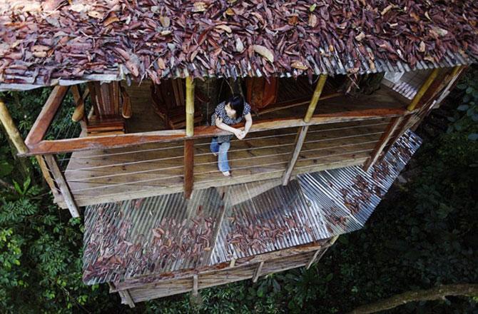 Finca Bellavista, satul din copaci - Poza 5