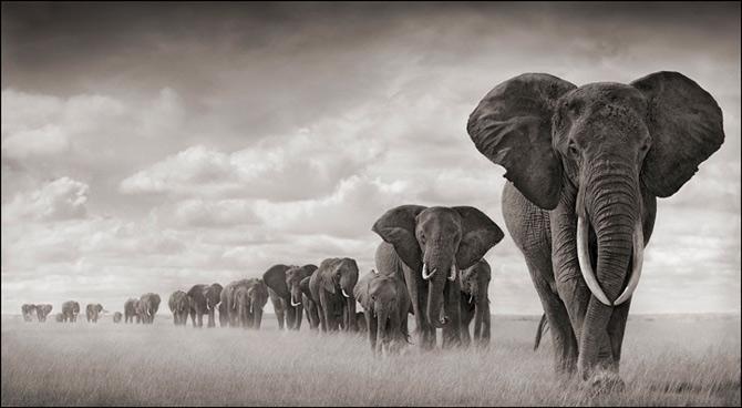 Recurs la Africa, de Nick Brandt - Poza 3