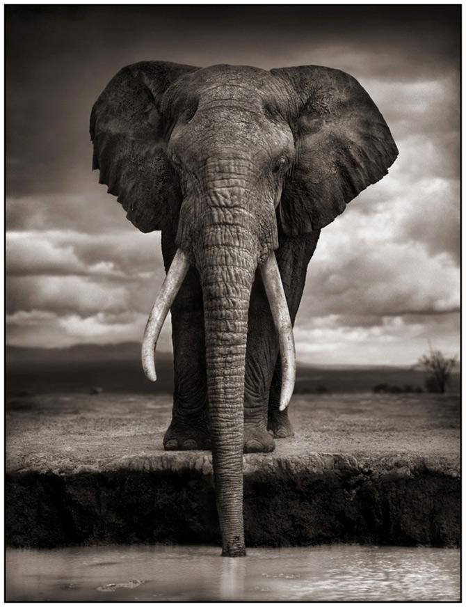 Recurs la Africa, de Nick Brandt - Poza 4