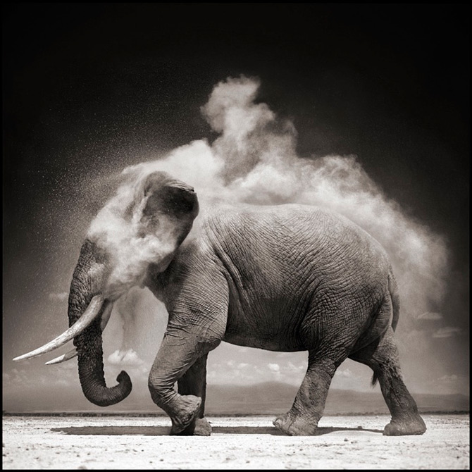 Recurs la Africa, de Nick Brandt - Poza 6