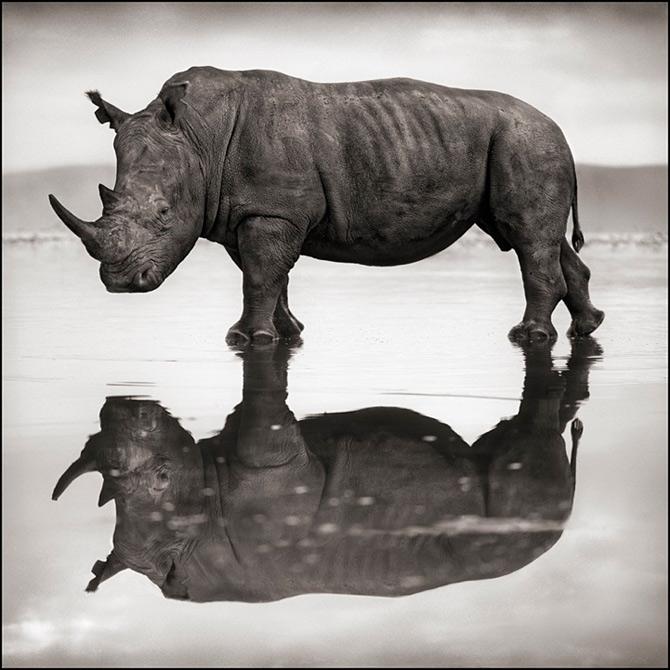 Recurs la Africa, de Nick Brandt - Poza 7
