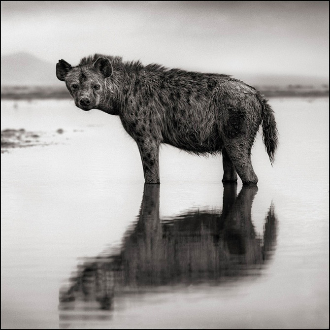 Recurs la Africa, de Nick Brandt - Poza 8