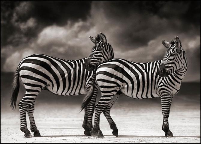 Recurs la Africa, de Nick Brandt - Poza 9