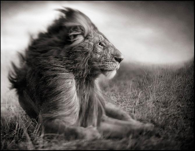 Recurs la Africa, de Nick Brandt - Poza 10