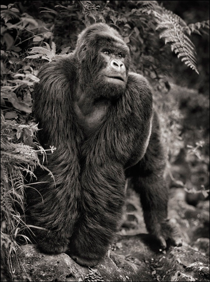 Recurs la Africa, de Nick Brandt - Poza 11