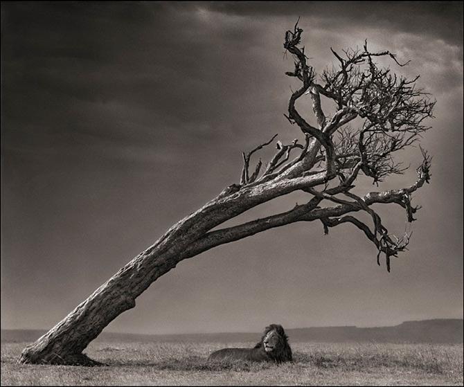 Recurs la Africa, de Nick Brandt - Poza 14