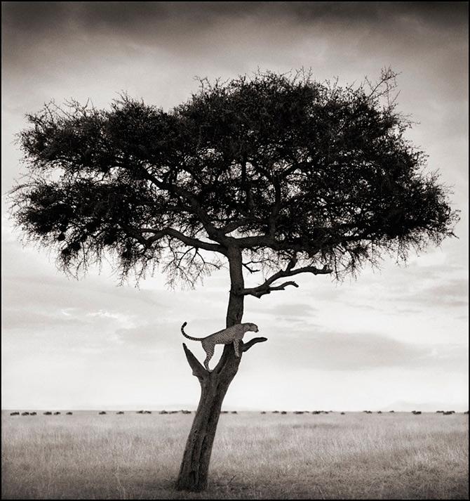 Recurs la Africa, de Nick Brandt - Poza 15