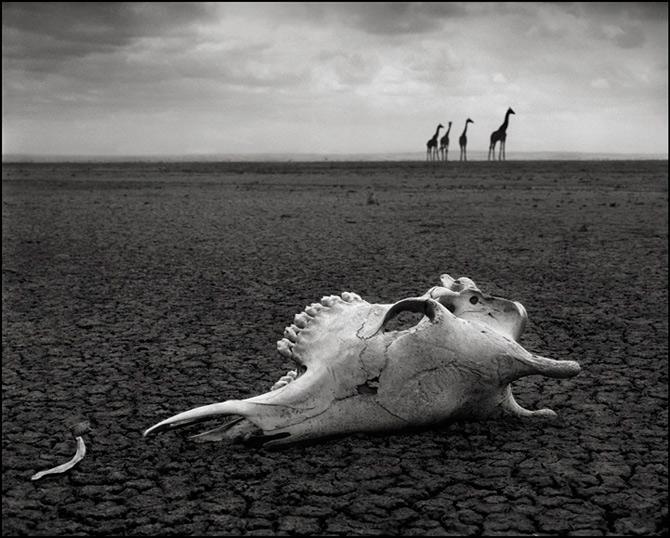 Recurs la Africa, de Nick Brandt - Poza 20