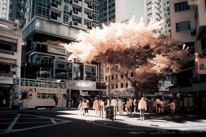 Post-New York la Hong Kong cu Yiu Yu Hoi - Poza 21