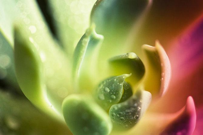 Diferenta dintre talent si geniu: macro de Brandt Campbell - Poza 18