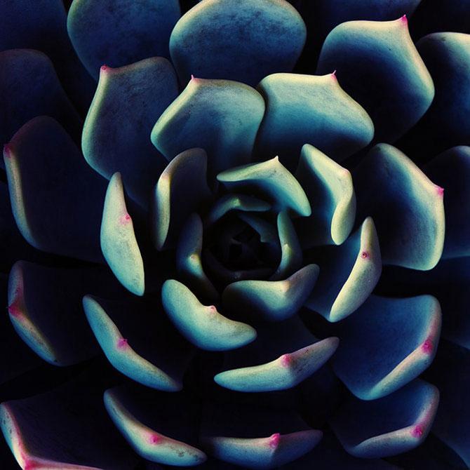 Diferenta dintre talent si geniu: macro de Brandt Campbell - Poza 22