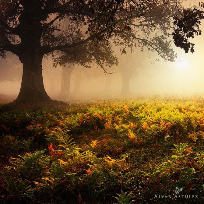 15 feerii in imagini, de Alvar Astulez - Poza 9