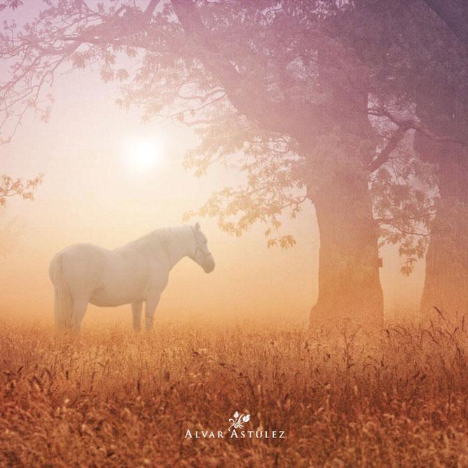 15 feerii in imagini, de Alvar Astulez - Poza 10
