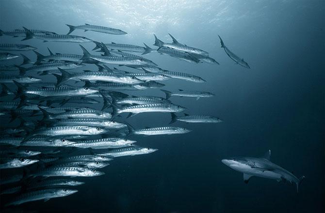 Cum sa vanezi rechini cu aparatul foto - Poza 9