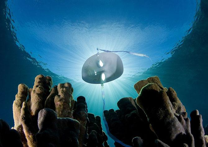 Cum sa vanezi rechini cu aparatul foto - Poza 11