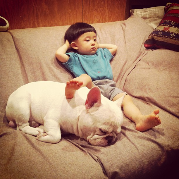 Baietelul si cel mai bun prieten al sau: bulldogul francez - Poza 2
