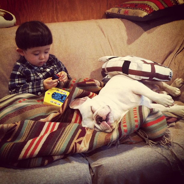 Baietelul si cel mai bun prieten al sau: bulldogul francez