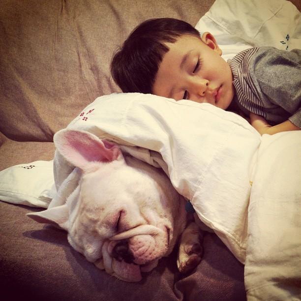 Baietelul si cel mai bun prieten al sau: bulldogul francez - Poza 7