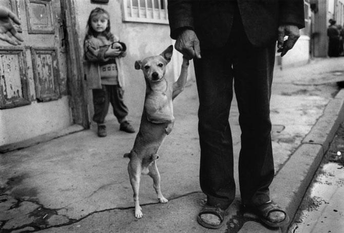 Spania miraculoasa din ochii copiilor - Poza 2
