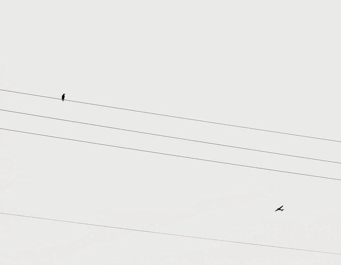 Peisaje linistite, de David Ryle - Poza 5