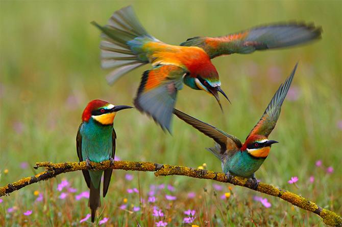 Culorile nebanuite ale naturii de Francisco Mingorance - Poza 5