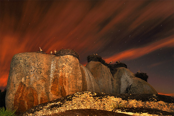 Culorile nebanuite ale naturii de Francisco Mingorance - Poza 13